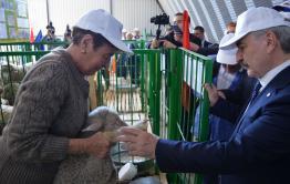 Приаргунский племзавод «Дружба» получил первый приз выставки овец в Бурятии