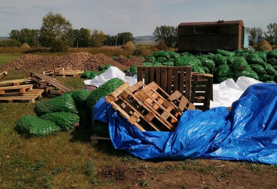 Китайские овощеводы губят покос семьи из Маккавеево, устроив перевалочную базу для картошки