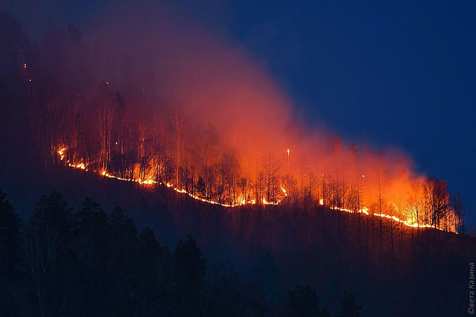 Лесной пожар 7 мая вплотную подошел к Карымской (ВИДЕО)