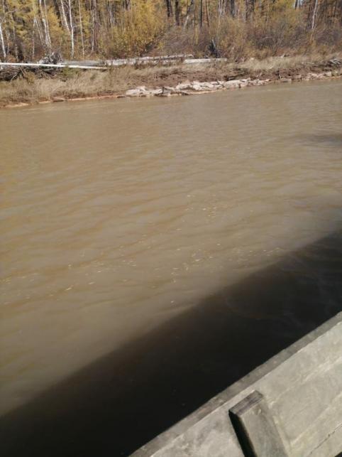 Жители Могочинского района бьют тревогу из-за загрязнения реки Тунгир (видео)
