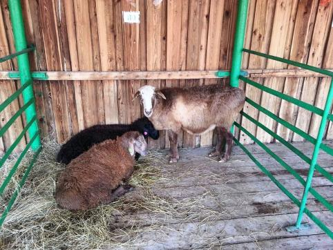 Забайкальским аграриям выдадут льготные кредиты по сниженным ставкам