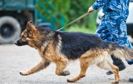 Полицейские и пес Шигер задержали мужчину с наркотиками в Чите