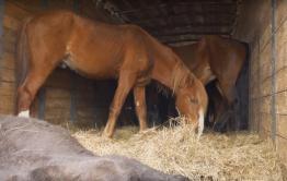 Полицейские не дали вывезти из Забайкалья в Новосибирск 72 лошади