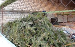 На территории колонии поселения в Тыргетуй находится 400 спиленных елок – читатели «Вечорки»