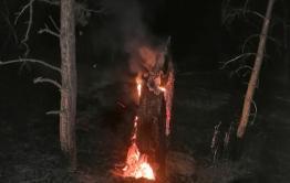 Горящий пень может стать причиной лесного пожара под Курорт-Дарасуном