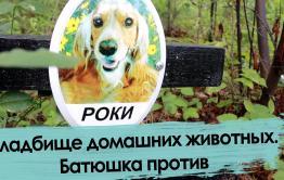 Кладбище домашних животных. Чита.