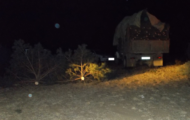 Бывший начальник лесхоза незаконно выдал разрешение на вырубку сосен в Цасучейском бору