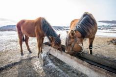 Эти милые создания пьют воду, которая отравлена мышьяком, он превышает норму в 13 раз. Село Чикичей Сретенского района. 28.02.2020