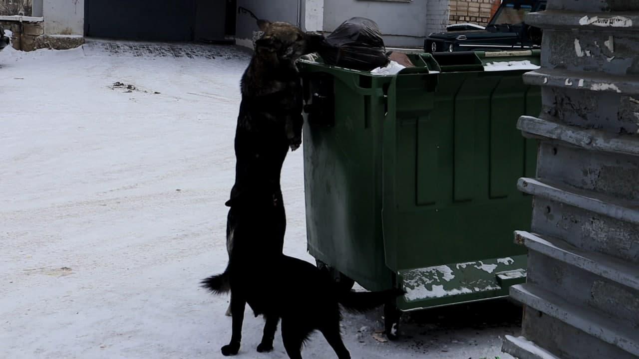 «Вечорка ЦУР»: Собаки атаковали мкр Сосновый бор в Чите