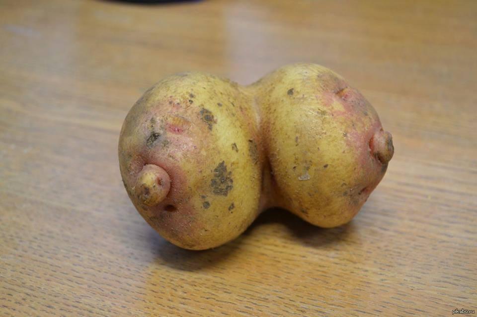 «Второй хлеб»: в Забайкалье тайно дорожает картошка