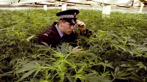 Полицейские изъяли у забайкальца почти полкилограмма марихуаны