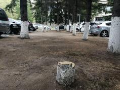 Черные лесорубы орудуют на парковке краевых чиновников и депутатов возле Чайковского, 8