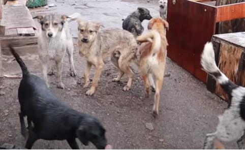 Читинцы пожаловались на стаю собак возле Школы № 30
