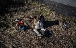 Забайкальская прокуратура организовала проверку по факту нападения собаки на 4-летнего ребенка
