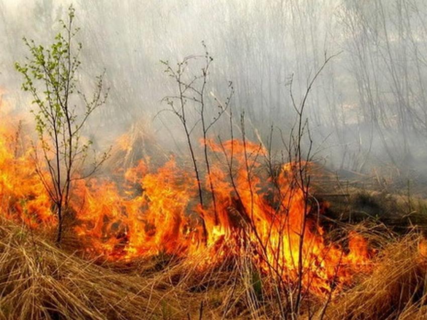 В Забайкалье до 31 мая продлен запрет на посещение лесов