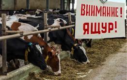 В приграничном селе Новоцурухайтуй введен режим ЧС из-за ящура