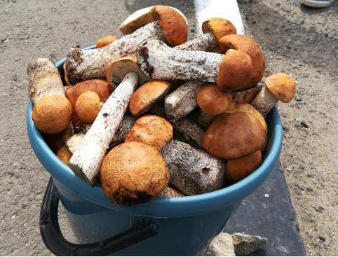 Роспотребнадзор напомнил россиянам как собирать грибы