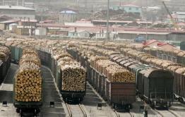Забайкалка просит Путина запретить вырубку и вывоз леса в Китай