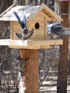 Белки гоняют голубей со своей кормушки. Ибо нефиг! Фото Виктории Михайлюк