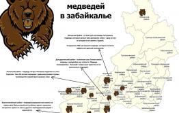 Медведи вышли к Мензе