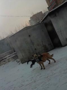 Польза бродячих собак - власти Читы нестандартно решили проблему бродячих кошек. Фото: группа Нетипичная Чита в ВКонтакте