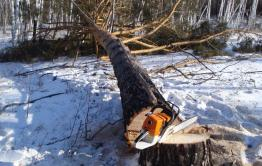 После увольнения лесника в селе Илим начали воровать лес