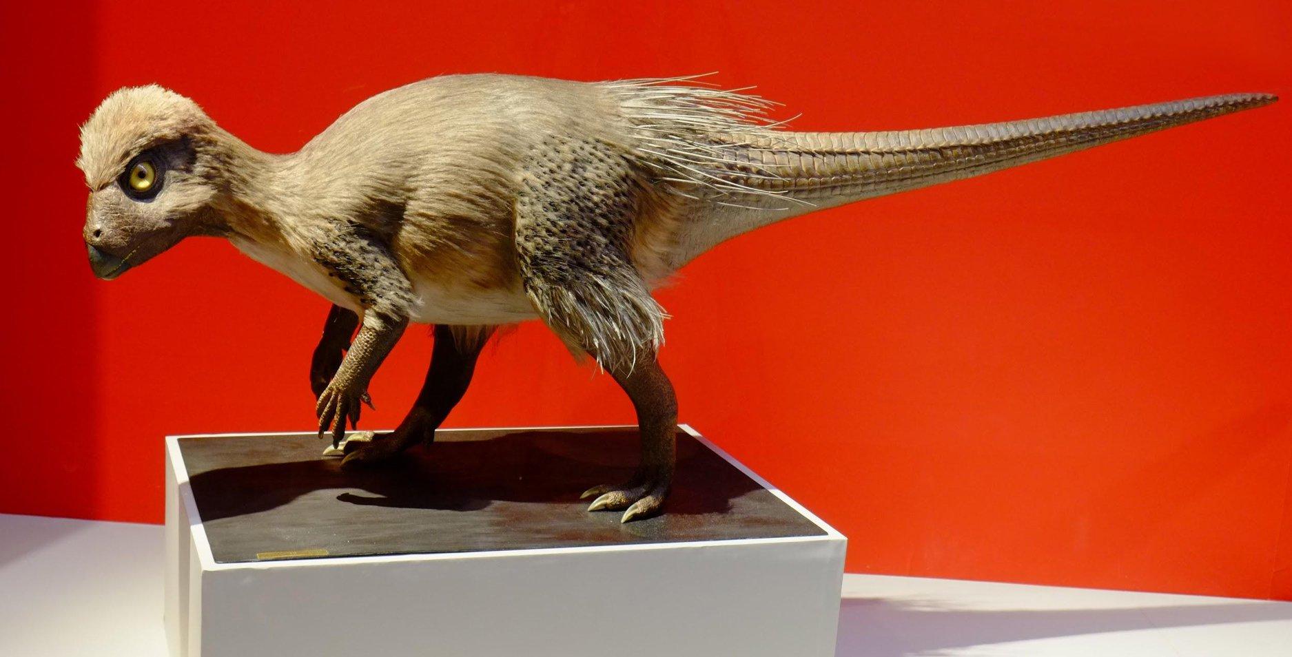 На месте обнаружения нового динозавра в Забайкалье создан стационар