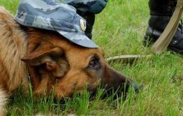 Служебная собака Майк взяла след и привела полицейских к преступнику