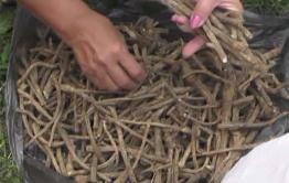 Неизвестные разобрали стену и обокрали пункт сбора корней солодки в Агинском районе
