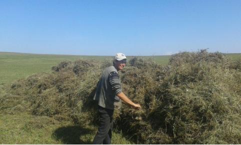 В Забайкалье солят не только грибы с огурцами, но и сено