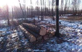 Дачники из СНТ «Полет» жалуются на вырубку деревьев
