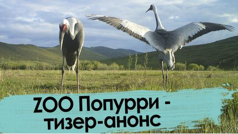 ZOO Попурри – тизер-анонс