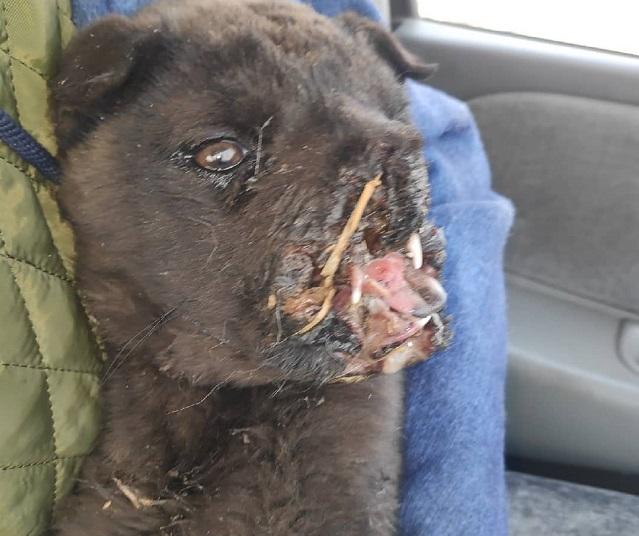 Живодеры взорвали петарду во рту щенка в Куке (18+)