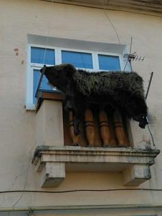 Шкуры убитых медведей - вместо белья на балконах Кокуя