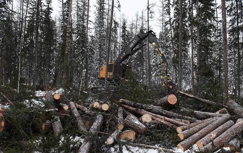 Житель Шилкинского района рассказал о странных ночных рубках леса