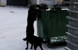 Жительница Домны жалуется на увеличение популяции бездомных собак