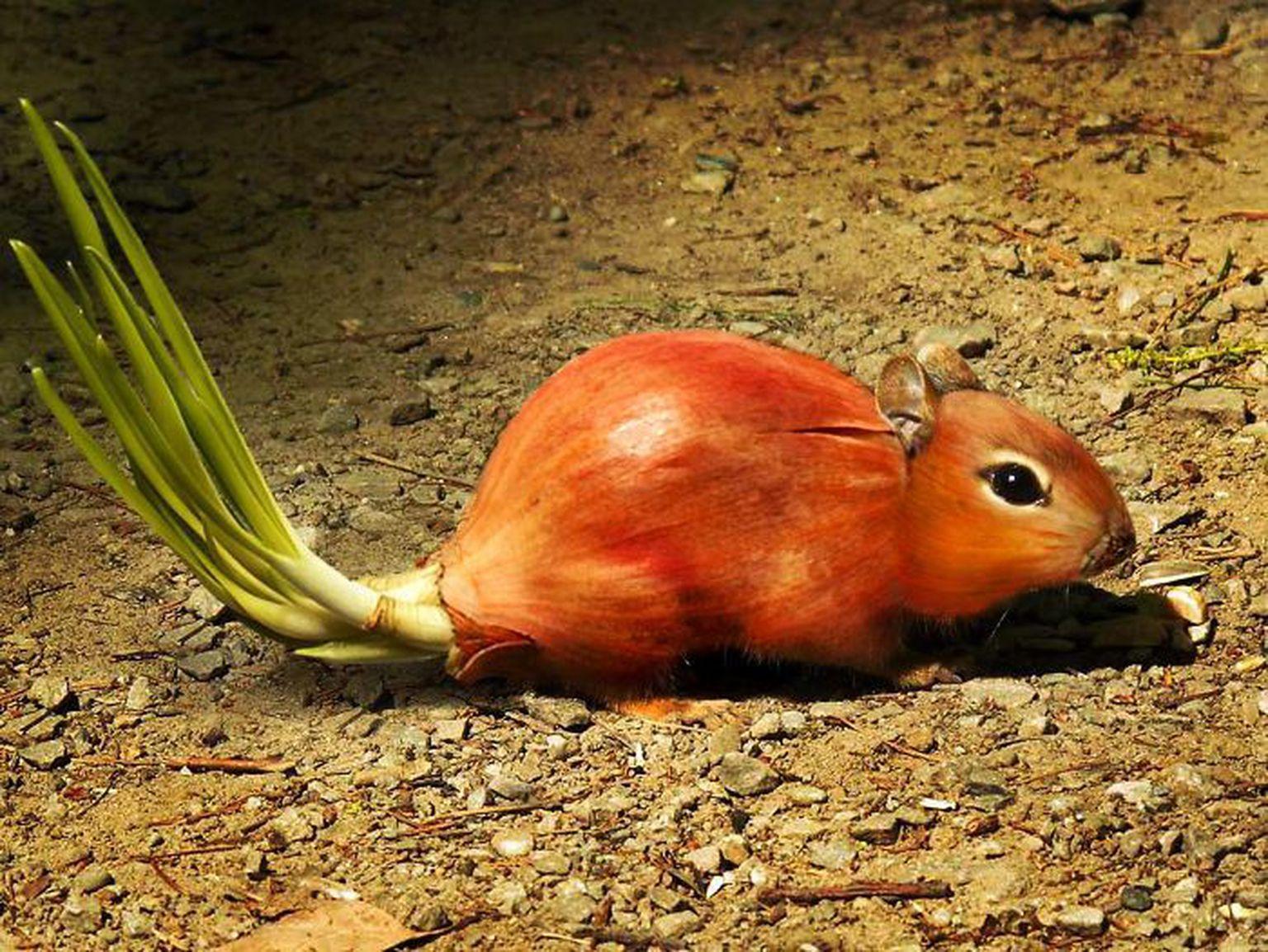 Ни мышонок, ни лягушка — забайкальские зоотехники поехали на конкурс селекционеров