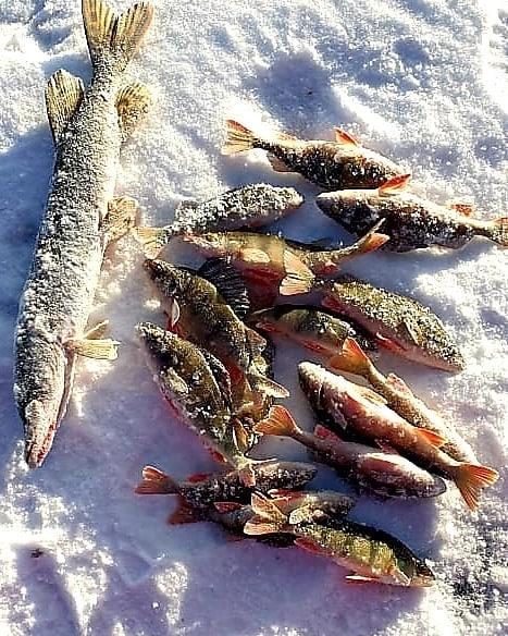 Зимний улов на Ивано-Арахлейских озерах. Автор фото: haninaluda. Озеро Иван. Январь 2021 год.
