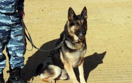 Пропавшую пенсионерку в Читинском районе нашли кинолог и собака