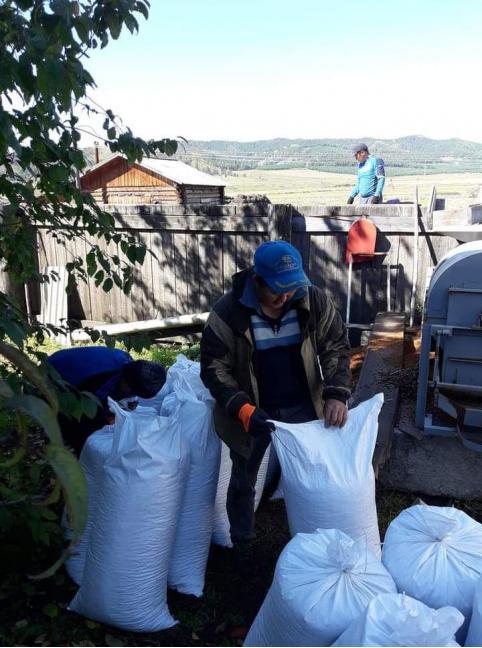Кедрачащее Забайкалье: Красночикойский район переживает кедровый бум — ореха много, цена высокая