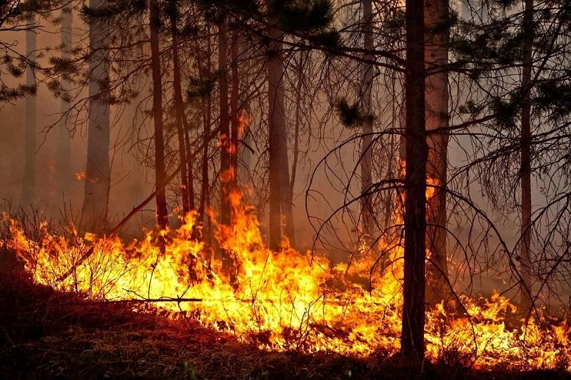 Лесной пожар в Кыринском районе перекинулся на Монголию