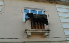 В Кокуе шкуру медведя сушат на балконе