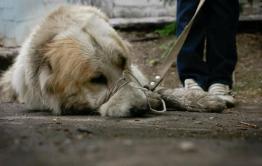 Житель Песчанки граблями забил собаку до смерти