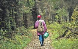 50-летняя женщина заблудилась в лесу под Читой