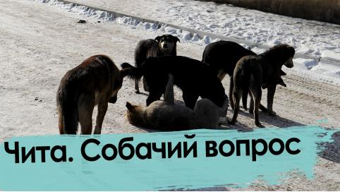Путин поручил вести учет домашних животных