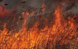 По факту пожара в Борзинском районе возбуждено уголовное дело