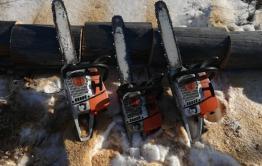 Четыре забайкальца заготавливали дрова на охраняемой территории