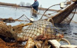 Отца директора Ивано-Арахлейского парка поймали на незаконной ловле рыбы