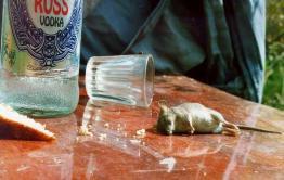 Житель ЗАТО Горный будет отрабатывать 120 часов кражу бутылки водки