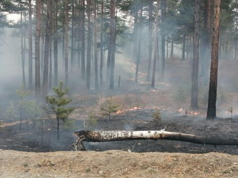 Поджигатель леса в Забайкалье заплатит более пяти тысяч рублей
